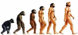 Evrim Teorisi Nedir Kısaca